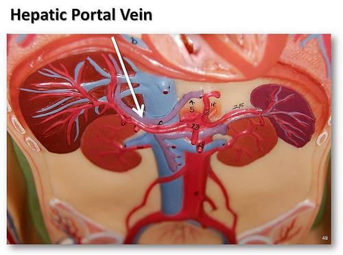 medical education portal